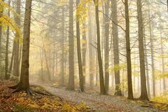 Beautiful autumn forest walk in the fog Stock Photo