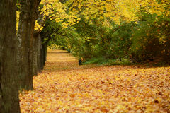 Beautiful autumn forest with walkiing path Stock Images