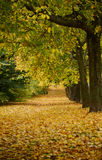Beautiful autumn forest with walkiing path Royalty Free Stock Photos