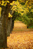Beautiful autumn forest with walkiing path Stock Photo
