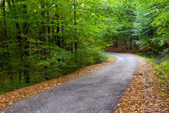 Beautiful autumn forest, winding road in it. Royalty Free Stock Photography