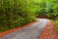 Beautiful autumn forest, winding road in it. Royalty Free Stock Image