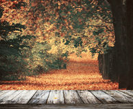 Beautiful autumn forest with wooden floor Stock Image