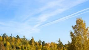 Beautiful autumn forest. Yellow trees against the blue sky royalty free stock photos