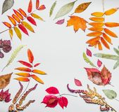Beautiful autumn frame made of various colorful dried autumn leaves. Fall nature background Royalty Free Stock Photos