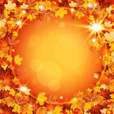 Beautiful autumn frame with maple leaves Stock Image