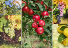 Beautiful autumn fruits collage Stock Images