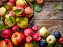 Beautiful autumn fruits Royalty Free Stock Photo