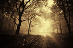 Beautiful autumn in a golden forest with fog Stock Images