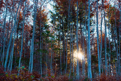 Beautiful autumn green, orange trees in forest and Stock Images