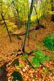 Beautiful Autumn Illinois Landscape Royalty Free Stock Photography