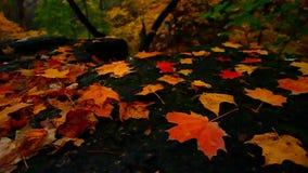 Beautiful Autumn Illinois Landscape stock footage
