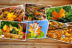 Beautiful autumn images collection Royalty Free Stock Images