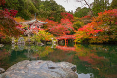 Beautiful autumn in japanese garden. With colorful maple trees, Kyoto, Japan Royalty Free Stock Photo