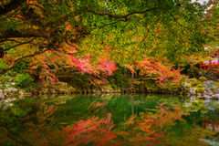 Beautiful autumn in japanese garden with colorful maple trees. Kyoto, Japan Royalty Free Stock Image