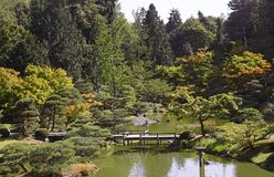 Beautiful autumn japanese garden in Seattle. On sunny day Royalty Free Stock Photography
