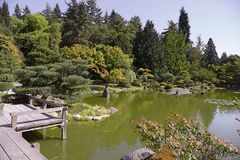 Beautiful autumn japanese garden in Seattle. On sunny day Stock Photography