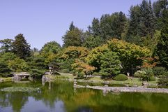 Beautiful autumn japanese garden in Seattle. On sunny day Stock Photos
