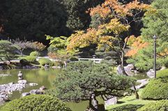 Beautiful autumn japanese garden in Seattle. On sunny day Stock Images