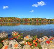 A Beautiful Autumn Lakeshore. Autumn comes to a pristine lakeshore with blue sky in the background Royalty Free Stock Images