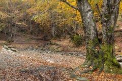 Beautiful autumn landscape Stock Photography