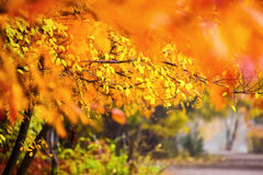 Beautiful autumn landscape. Autumn landscape with colorful fores royalty free stock image