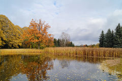 Beautiful autumn landscape - the autumn pond Stock Photos