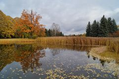 Beautiful autumn landscape - the autumn pond Royalty Free Stock Images
