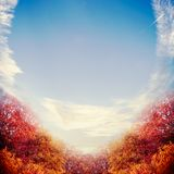 Beautiful autumn landscape background with red color trees foliage and sky Royalty Free Stock Photo