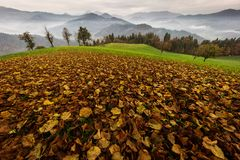 Beautiful autumn landscape with colorful leafs and foggy mountains in background stock photos