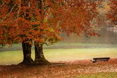 Beautiful autumn landscape with colorful leafs and river royalty free stock photography