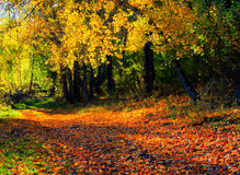 Beautiful autumn landscape. Fall season Royalty Free Stock Images