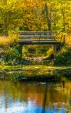 Close-up of an Autumn forest reflection landscape. Forest, pond, and footbridge. stock photos