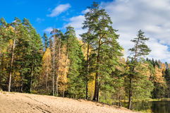 Beautiful autumn landscape with forest Lake Stock Photos