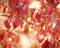 Beautiful autumn landscape in forest, red leaves in sunlight Royalty Free Stock Photos