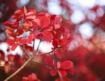Beautiful autumn landscape in forest, red leaves in sunlight Royalty Free Stock Photography