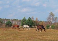 Beautiful autumn landscape with horses Stock Photo