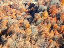 Free Beautiful Autumn Landscape In The Mountains With Colorful Trees Royalty Free Stock Photos - 189345998
