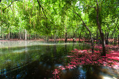 Beautiful autumn landscape with lake in national park of Thailan. D Stock Image