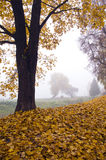 Beautiful autumn landscape with leaves and morning fog Royalty Free Stock Photo