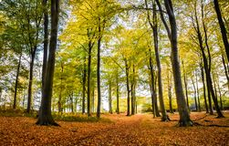 Autumn Landscape in Staffordshire, England. A beautiful autumn landscape lookng across Cannock Chase Area of Outstanding Natural Beauty Royalty Free Stock Images