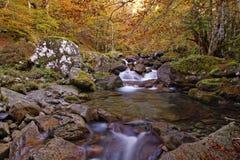 Beautiful autumn landscape Royalty Free Stock Image