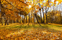 Beautiful autumn landscape Stock Image