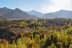 Beautiful autumn landscape with mountain and forest Stock Photography
