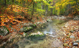 Beautiful autumn landscape with mountain river and colorful trees Stock Image