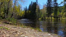 Beautiful autumn landscape. The mountain river flows in the middle of the woods stock footage