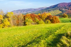 Beautiful autumn landscape in mountains. Green grass on the meadow. yellow and red foliage on trees. sunny forenoon royalty free stock images