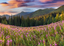 Beautiful autumn landscape in the mountains with pink flowers. Stock Photos