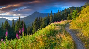 Beautiful autumn landscape in the mountains with pink flowers. Royalty Free Stock Photography