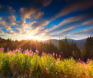 Beautiful autumn landscape in the mountains with pink flowers Stock Photography
